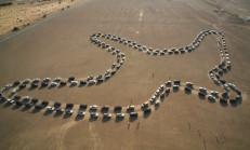 180 Nissan Patrol ile Dünya Rekoru Kırıldı