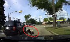 Arabanın Camından Çıkan Köpek Ölümden Döndü