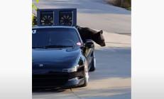 Ayılar Mazda MR2'ye Dadanırsa!